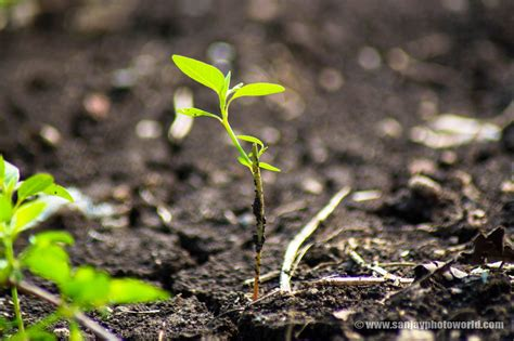 cool small palnts to grow sanjay photo world growing plants from soil hd wallpapers
