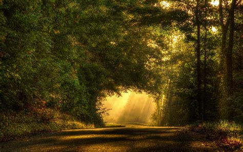 Car Wallpapers Desktops Forest by Wallpaper Road Light Sun Rays Forest Tree Desktop