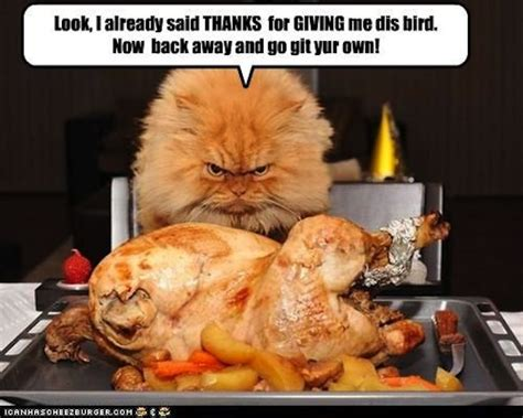 Funny Thanksgiving Meme - funny happy thanksgiving memes image memes at relatably com