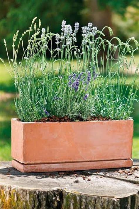 vasi per piante aromatiche vasi per piante aromatiche idee per il design della casa
