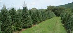 pleasant valley tree farm cut your own and pre cut