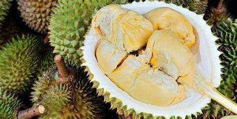 Bibit Durian Petruk Asli bibit durian unggul dari untidar okezone news