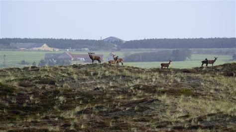 nationalpark thy visitnordjylland