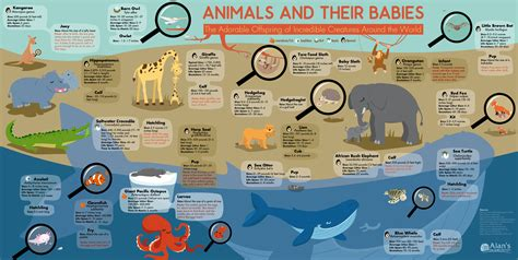 infographics animal kingdom 1848776543 baby animal facts that will absolutely make your day infographic lifehacker australia