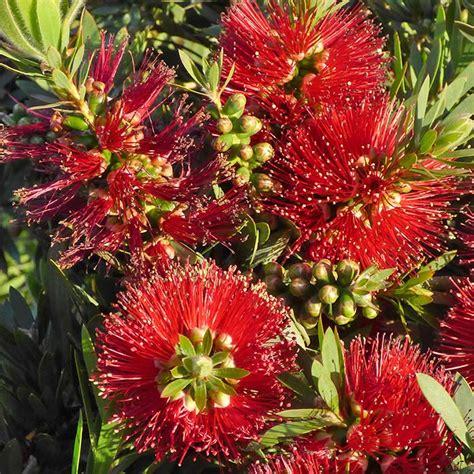 southern flowering shrubs southern california gardening shrubs extend the bloom season