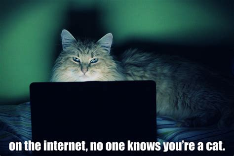 Internet Cat Meme - on the internet no one knows you re a cat meh ro