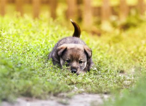how dogs intestinal viral infection rotavirus in dogs petmd