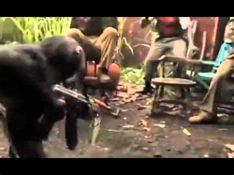 real monkey shooting men   gun youtube