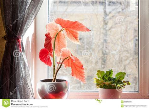 fiori da davanzale vasi da fiori sul davanzale vetro polveroso natura morta