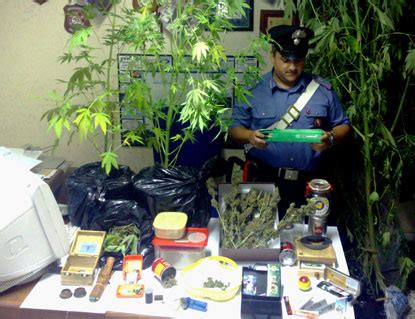 coltivare marijuana vaso marijuana sul terrazzo dei carabinieri cronaca ultime