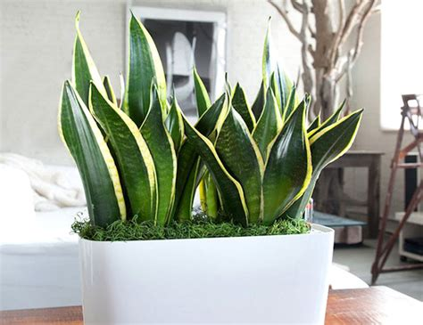 money plant in bedroom 11 plants for your bedroom to help you sleep better