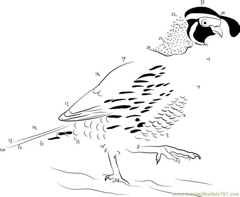 california bird coloring page 87 coloring pages quail click the california valley