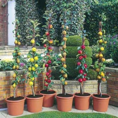Alberi Da Fiore Per Giardino by Arbusti E Piccoli Alberi Da Fiore E Da Frutto Per Giardini