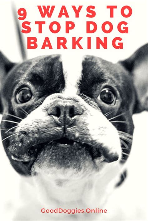 dog barks when i leave 9 ways to stop your dog from barking when you leave