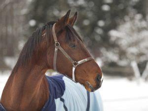 wann ist ein pferd alt wann sollte ein pferd scheren
