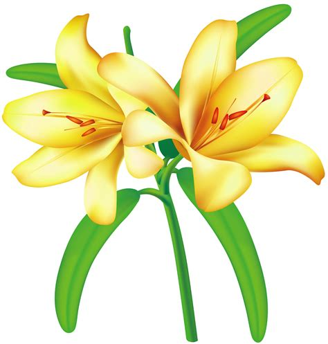Benihbijibibit Bunga Tulip Blanc free images yellow flowers free clip free clip on clipart library