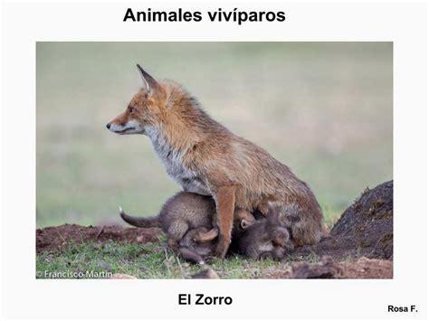 imagenes animales viviparos maestra de primaria animales viv 237 paros vocabulario en