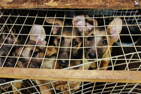 puppy mill laws arizona raises a middle finger to puppy mills with a that pet stores can only sell