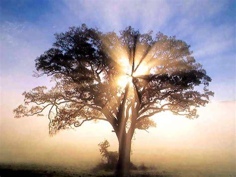 divine light recovery house el blog de marybel cuento la soberbia del arbol