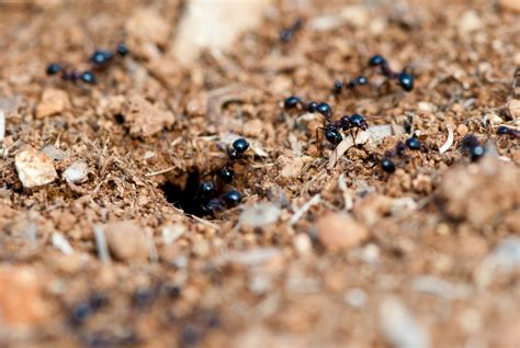 how to get rid of carpenter ants in bathroom how to get rid of carpenter ants tomlinson bomberger