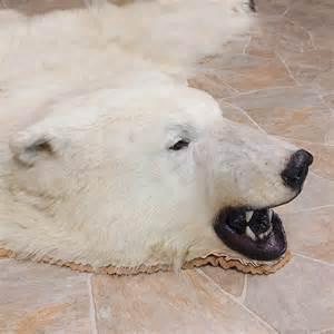 polar taxidermy rug mount for sale 11056 the