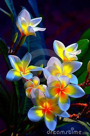 fiori tropicali oltre 25 fantastiche idee su fiori tropicali su