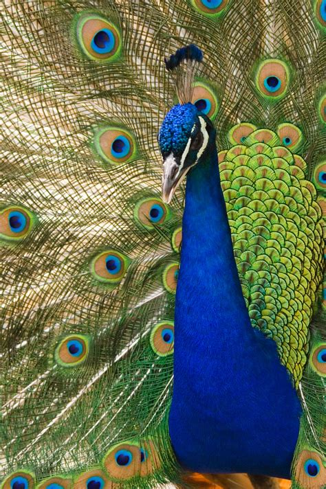 color peacock practical thread magic in search of peacock colors
