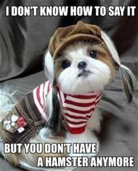 dog house jokes funny animals on pinterest funny animal funny animal pictures and funny dogs