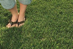 how to a to stay in your yard how to get rid of weeds in your lawn tomlinson bomberger