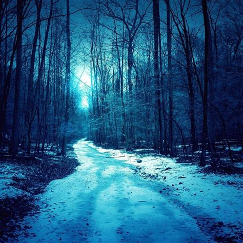 winter trees roads ipad air wallpaper retina ipad