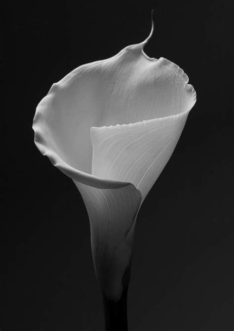 mapplethorpe fiori perfezione e natura nei fiori di robert mapplethorpe