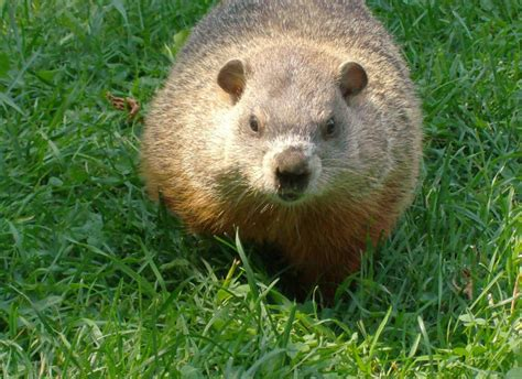 groundhog day no shadow meaning today s positive thought what does it if the