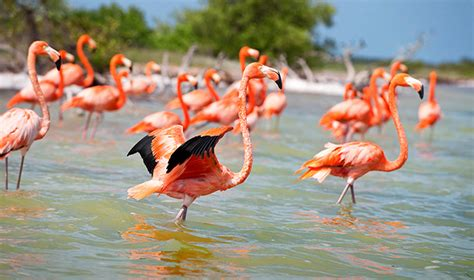 Nucover Tropical Flamingo best of yucatan peninsula and riviera with chable