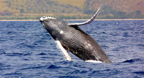 mamiferos de espana 8487334970 mam 237 feros marinos en espa 241 a animaleshoy