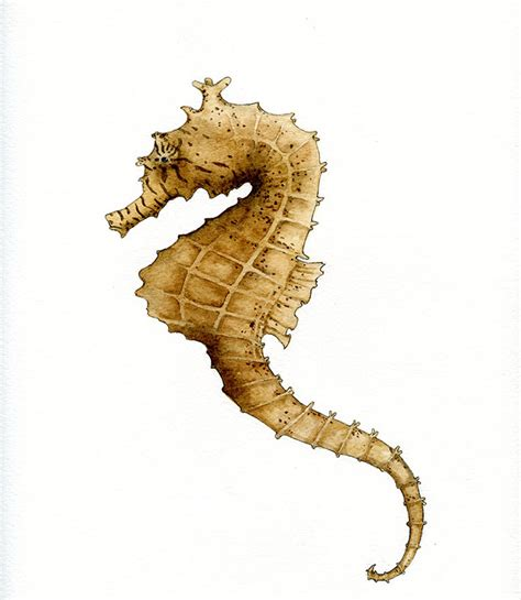 how to draw and paint a seahorse step by step