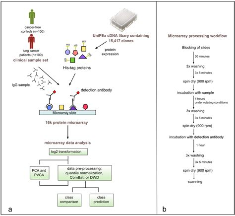 microarray workflow microarrays free text immune signatures for lung