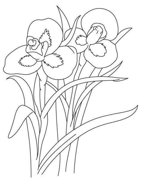 coloring pictures of iris flowers iris flower coloring page az coloring pages