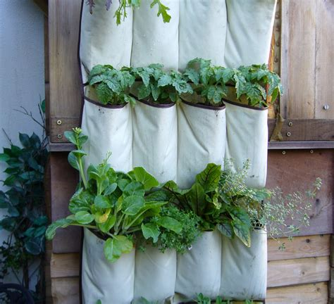 vertical vegetables quot grow up quot in a small garden and confound the cats