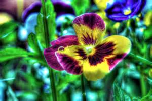 bright colored flowers dave dicello photography flowers brightly colored