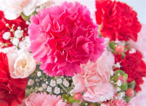 imagenes las flores lenguaje de las flores verdissimo