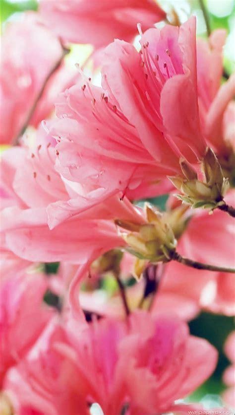 beautiful spring flowers beautiful spring flowers full hd android wallpaperdx com