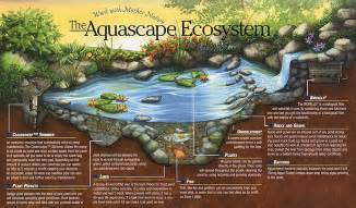 certified aquascape contractor cac pond builder