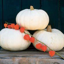 Pumpkin Seeds Biji Labu 100gr benih big max pumpkin 2 biji non retail bibitbunga