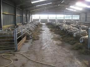 small sheep barn plans chellsia