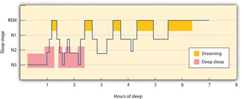 typical sleep pattern 2 year old sleeping and dreaming revitalize us for action