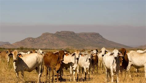 cattle names big names buy up cattle stations farm