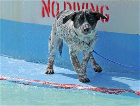dog days of summer end with a splash north texas e news