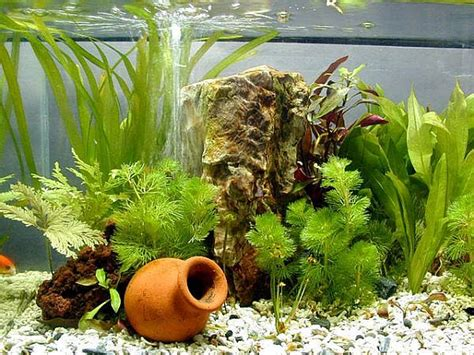 tropical fish tank maintenance live plants 2017 fish - Plants For Tropical Fish Tanks