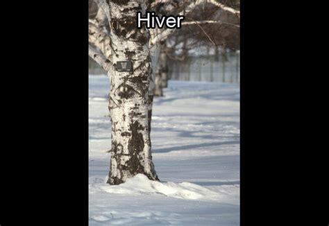 zoom sur l arboretum au de l arbre