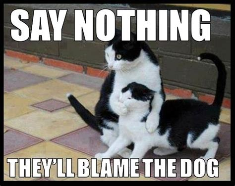 you nothing meme say nothing they ll blame the humor cat meme